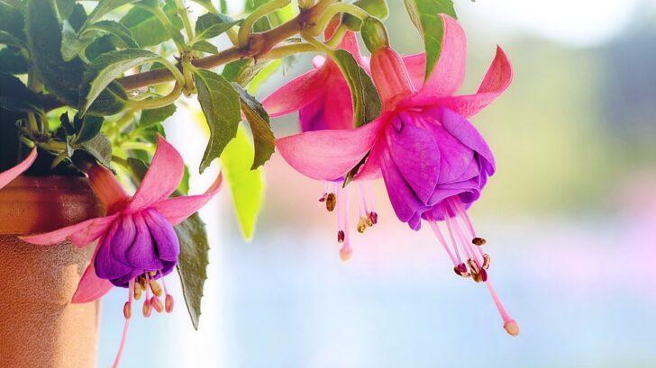 kvety-728x409.jpg