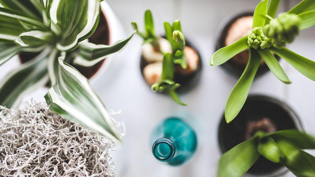 Perex_Titulka_Pokojové rostliny