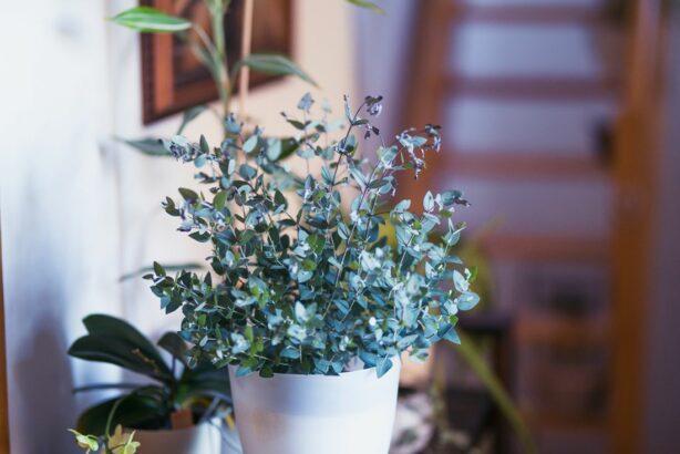 eukalyptus_shutterstock_1665589723-614x410.jpg