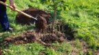 vysadba-stromushutterstock_214337929-144x81.jpg