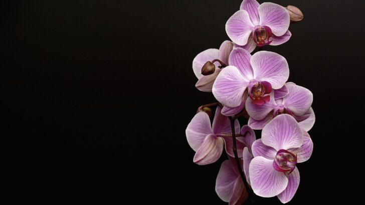 fialova-orchidej-728x409.jpg