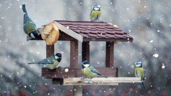 krmitko-ptak-zima-352x198.jpg