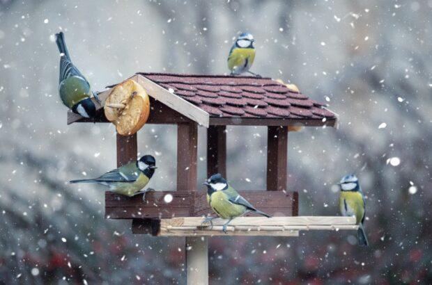 krmitko-ptak-zima-620x410.jpg