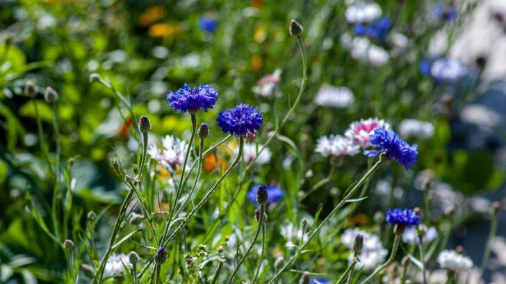 kvetiny-unsplash-728x409.jpg